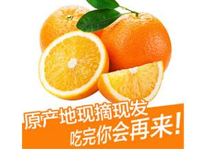 赣南脐橙水果产地现摘现发,一件代发