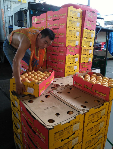 广州集果轩批发一手货源进口水果南非西柚供应电商网红餐饮浓缩果汁加工企业