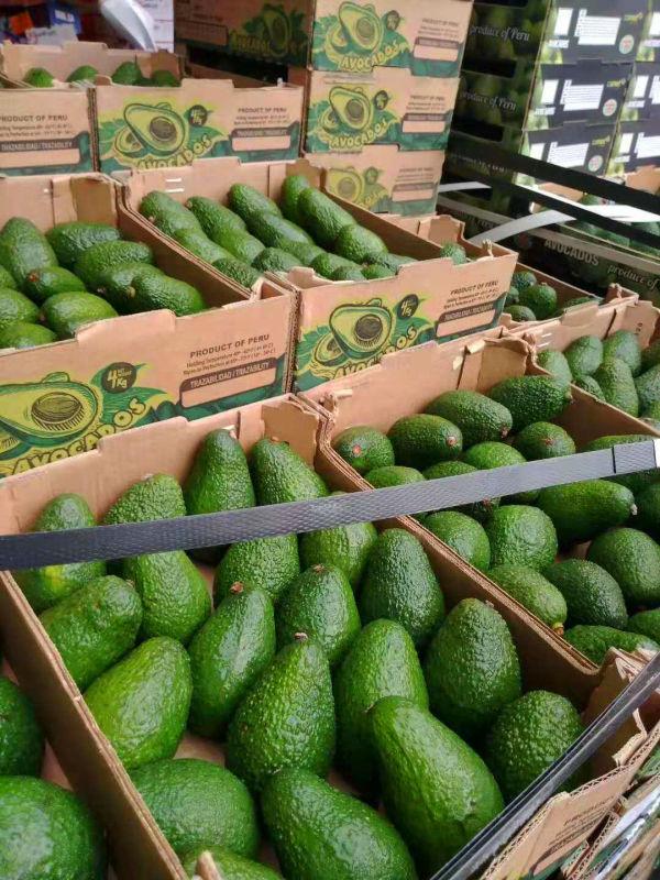 广州集果轩大量供应进口水果鳄利智利牛油果批发超市电商餐饮
